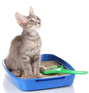 The Essentials – Feline Inappropriate Elimination Master Course