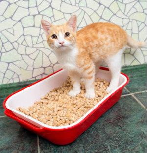 The Basics – Feline Inappropriate Elimination Master Course